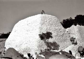 Mountain of cotton in Khamgaon, Central India, approx. 1948 | © Ernst Würgler, former operations engineer at Volkart. Provided by Madeleine Gerber-Würgler, Winterthur